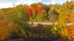 Forest full of bright autumn colors - aerial Stock Footage