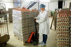 Female staff loading carton of eggs on pallet jack Stock Photos