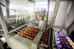 Eggs moving on the production line Stock Photos