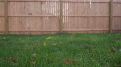 Low Angle Grass Move Left and Right Fence in Background Stock Footage