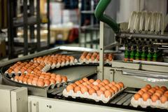 Cartons of eggs moving on the production line Stock Photos