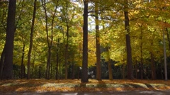 Forest full of bright autumn colors Stock Footage