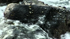 Black Crab On Lava Rock With Waves Surging Stock Footage