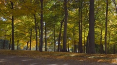 Forest full of bright autumn colors - panning shot Stock Footage