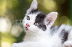 Beautiful small kitten on nature Kuvituskuvat