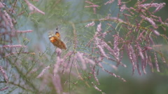 Butterfly flitting on the flowers Stock Footage