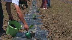Group of gardeners planting seedlings trees by Sheyno Stock Footage