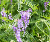 Beautiful blue flower on nature Stock Photos