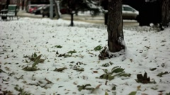 The road in the snow and leaves Stock Footage