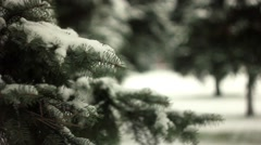 Branches in the snow Stock Footage