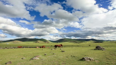 Horses graze in the valley of the  Ulaan river, Mongolia. Full HD Stock Footage