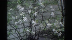 1971: the oldness and artistic of nature with flowers and the fleetingness  Stock Footage