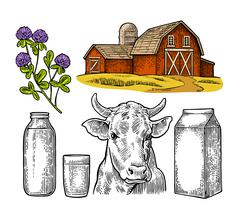 Set Milk farm. Cow head, clover, box carton package, glass and bottle. Stock Illustration