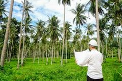 Architector inspect land for construction site in coconut palm tree grove Stock Photos