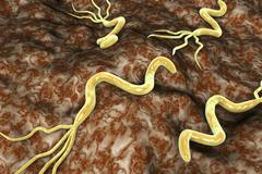 Helicobacter pylori bacterium Stock Illustration