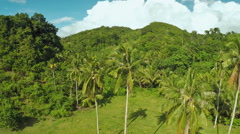 Rainforest and jungle. Palm trees. Philippines Stock Footage