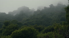 Deep forest tree tops in overcast weather fog and mist Stock Footage