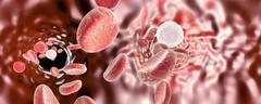 Blood vessel with erythrocytes Stock Illustration