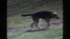 1975: dogs walking along trail, panning shot of scenery ATLANTA GEORGIA Arkistovideo