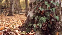 Dolly shot of brown dry leaves on the ground in the forest and tree trunks. Stock Footage