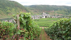 Vineyards of Moselle river. In background village Beilstein Stock Footage