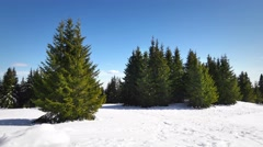Panoramic view over a snow covered slope with young saplings conifer pine tree Stock Footage