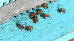 Honeybees at work at the entrance of the beehive Stock Footage