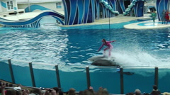 Trainer riding dolphins Stock Footage