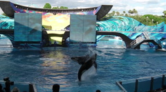 Seaworld killer whale Stock Footage