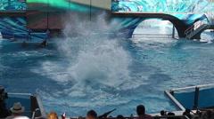 Tilikum Seaworld Orlando Stock Footage