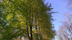 Eaf fall in the autumn city park. Slow motion footage. Stock Footage