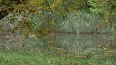 Lake or River Dry Leaves on Watery Surface Park by the Water Forest in Autumn Stock Footage