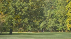 In a City Park in September, Beginning of Autumn, Meadow and Old Big Oaks, Stock Footage