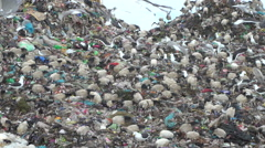 Birds pick through litter on a huge landfill Stock Footage