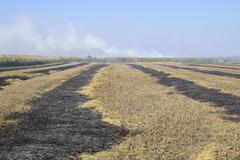 Burning track in paddy field Stock Photos