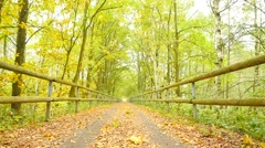 Sportsman in pink and black. Man slowly run on forest road with autumn leaves. Stock Footage