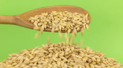 Wooden spoon pours grains barley at heap of barley on a green screen Stock Footage