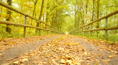 Slow camera movement.The manslowly run on asphalt way covered by autumn leaves. Stock Footage
