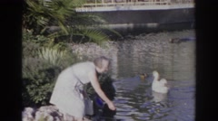 1966: feeding the swans in a pond at a park, NORFOLK VIRGINIA Stock Footage