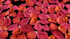 Zoom beautiful rose petals with dew drops Stock Footage