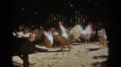 1939: a day in the life of chickens. AUBURN CALIFORNIA Stock Footage