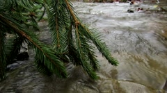 Tree fell into a stream Stock Footage