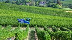 Time Lapse, Grape Harvest Machine - Bordeaux Vineyard Arkistovideo