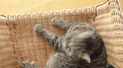 Cat relaxing on wicker chair in living room Stock Footage