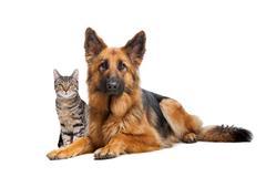 Cat and a German Sheherd dog Stock Photos