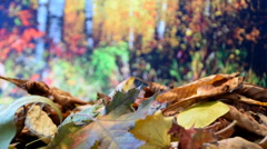 Fallen leaves in the forest Stock Footage