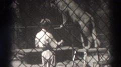 1937: zookeeper directs large cat into balancing on a pole EL MONTE CALIFORNIA Stock Footage