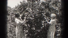 1937: women playing with a tree wearing beautiful dresses LONG BEACH CALIFORNIA Stock Footage