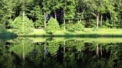 Forest Reflecting In Calm Lake Water Stock Footage