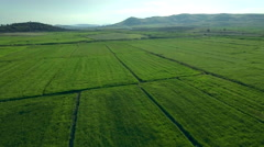 Aerial forward drone motion green field rice plantation agriculture horizon wide Stock Footage